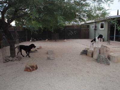 backyard-082011-022