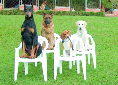 dog trainers tucson call us 520 790 dogs 3647 garvinu002639s dog dog training 400x290