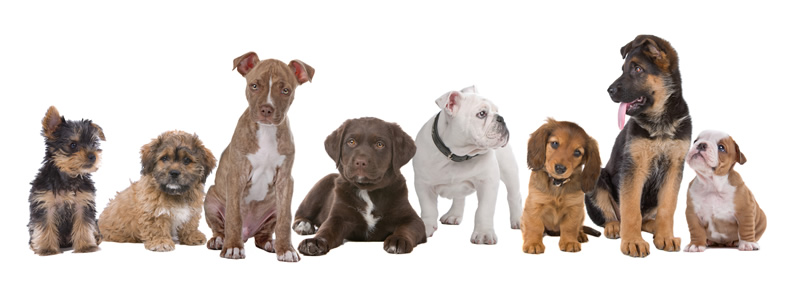 Fotolia_Puppies_Small